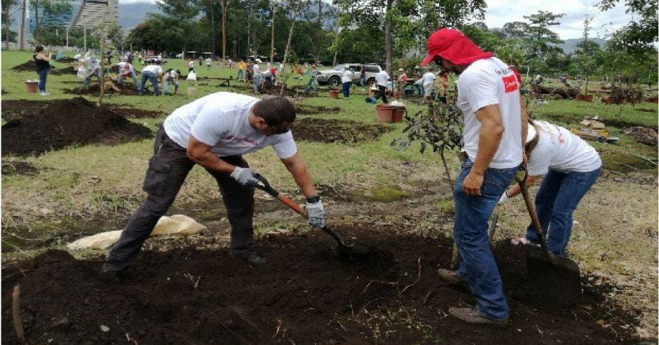 Especies de árboles en vía de extinción se plantaron en La Sabana