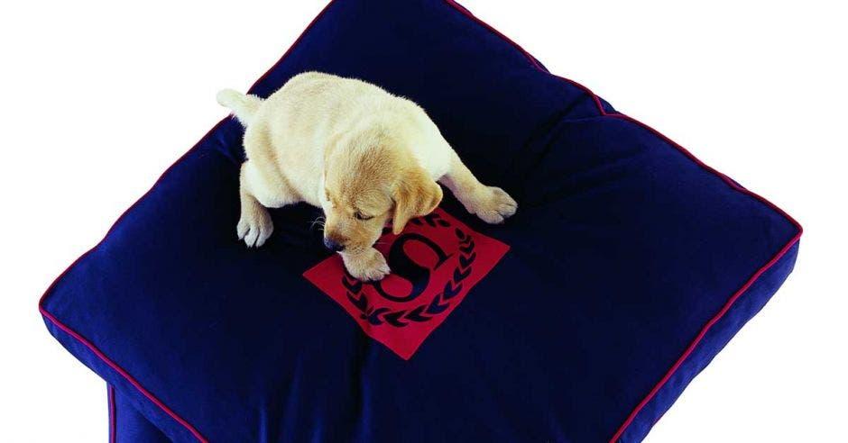 perro encima de una almohada azul con el logo de Sheraton