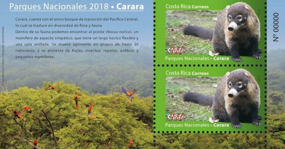 un sello postal con un pizote en la imagen