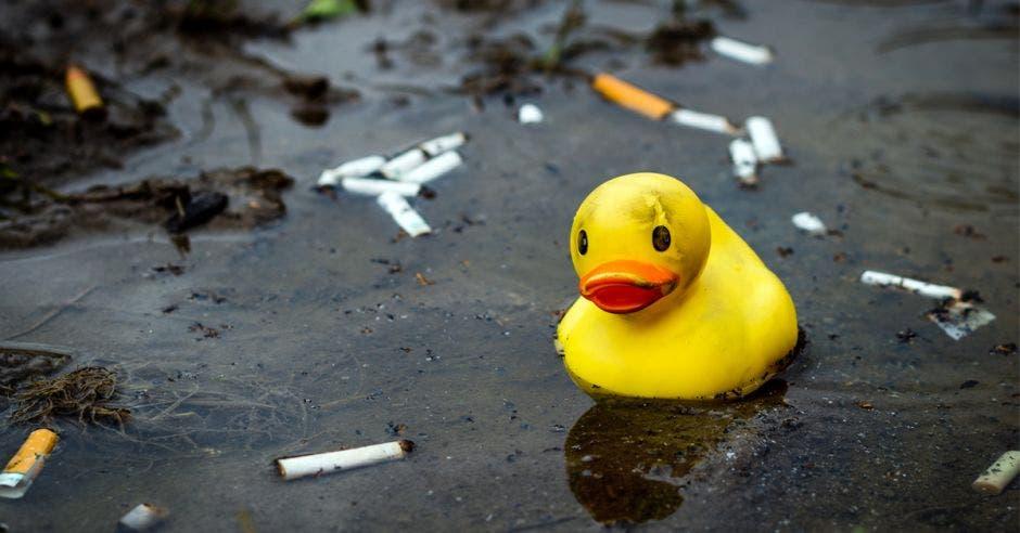 colillas de cigarro en el agua