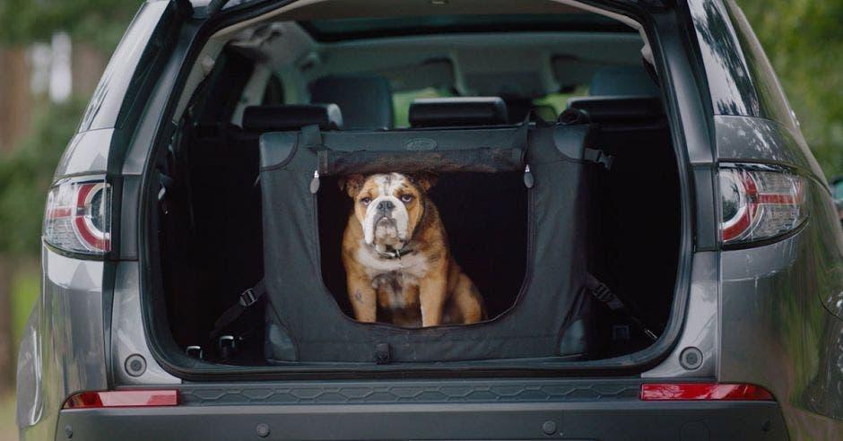 Land Rover Costa Rica lanzó paquete para que mascotas viajen en portaequipajes de lujo