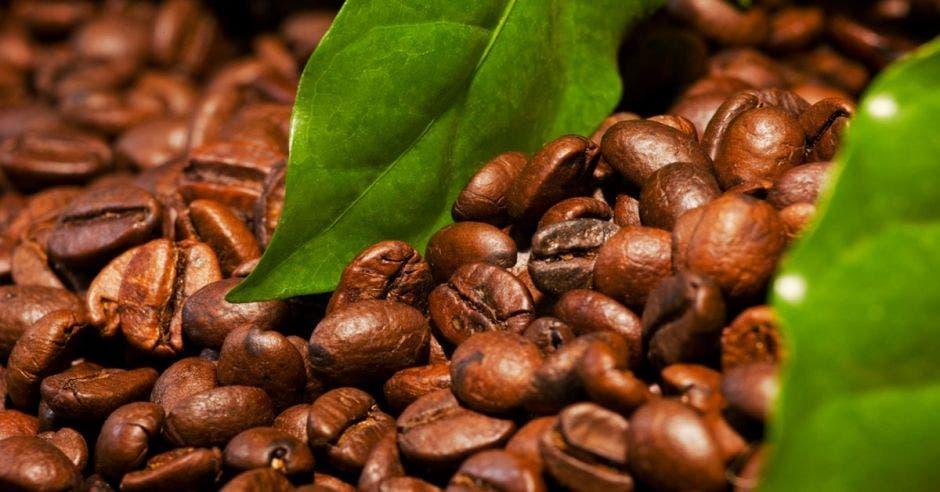 Turrialba será la sede de la feria nacional del café