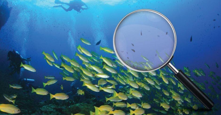 Un lente sobre un cardumen de peces