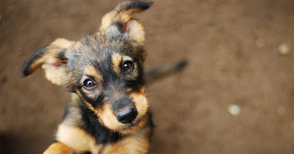 Un perro mira fijamente a los ojos de su dueño