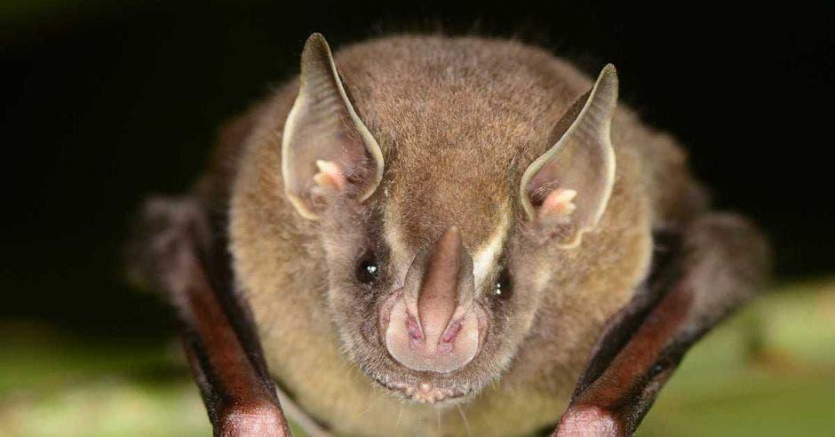 Un murciélago posa sobre una rama en la noche