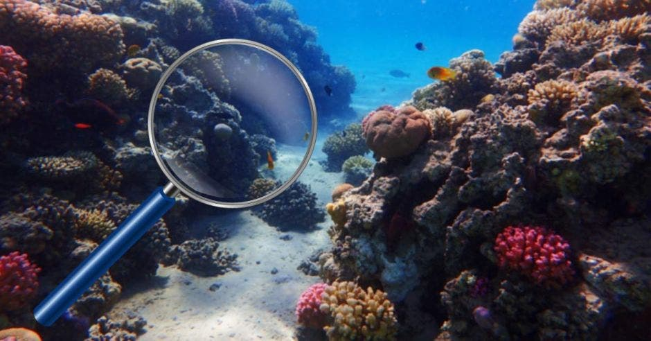 Una lupa investigando arrecifes marinos