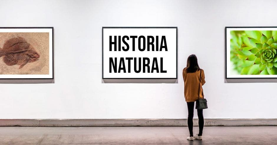 """Mujer observando un cuadro en un museo que dice """"Historia Natural"""""""