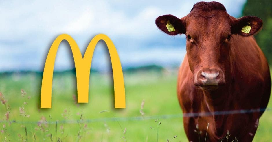 Una vaca color café junto al logo de McDonald's