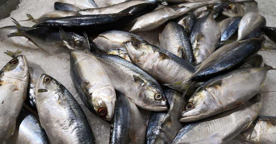 Varios atunes recién pescados, en una hielera