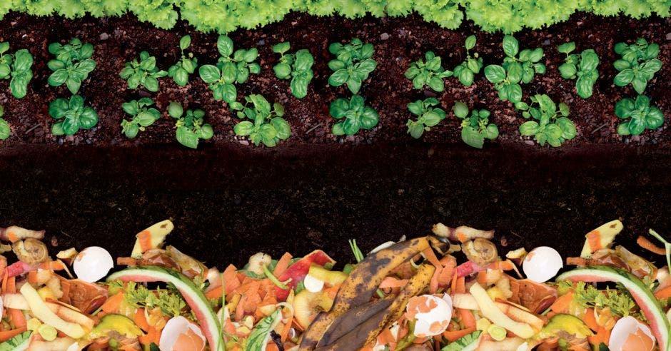 compost tierra vegetales