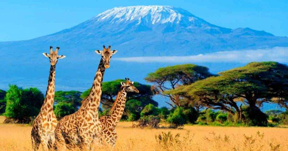 El Kilimanjaro y la sabana africana se combinan para crear una puesta escénica deslumbrante. Shutterstock/La República