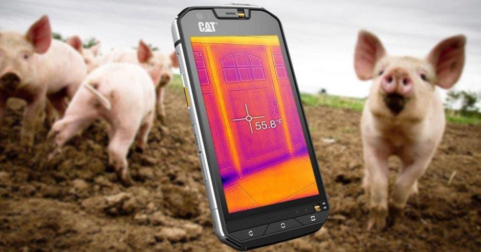 Un celular sobre un fondo de cerdos