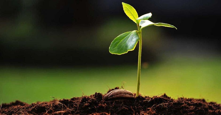 Una planta crecciendo
