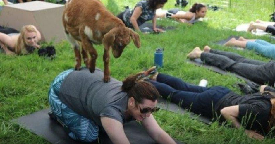 mujeres haciendo toga y cabras alrededor