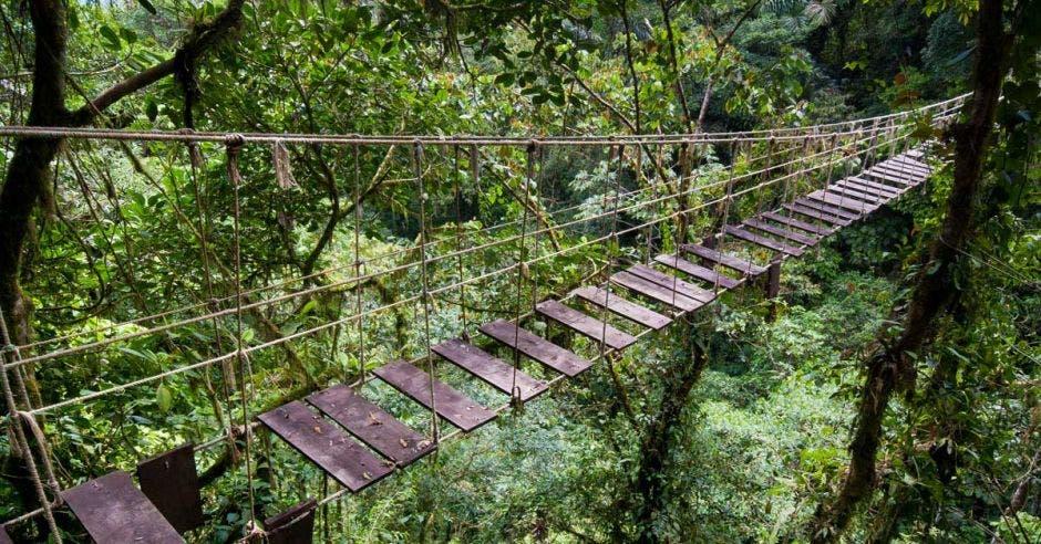 Un puente en mal estado dentro de una reserva forestal