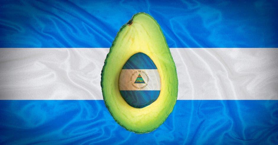 Aguacate de Nicaragua se come en Costa Rica