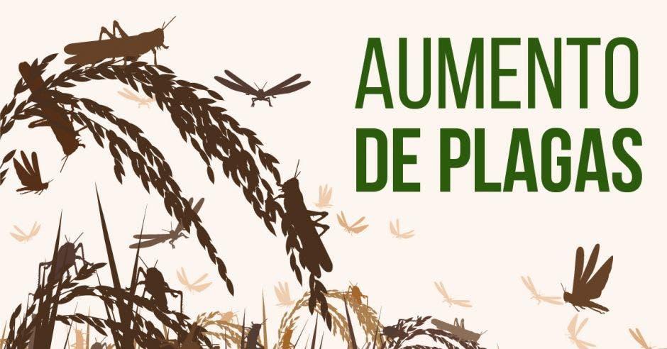 Las plagas, los patógenos y las malezas ya causan la pérdida de más del 40 % del suministro mundial de alimentos. Elaboración propia/La República