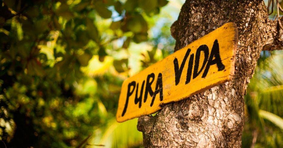 Letrero de Pura Vida en un árbol
