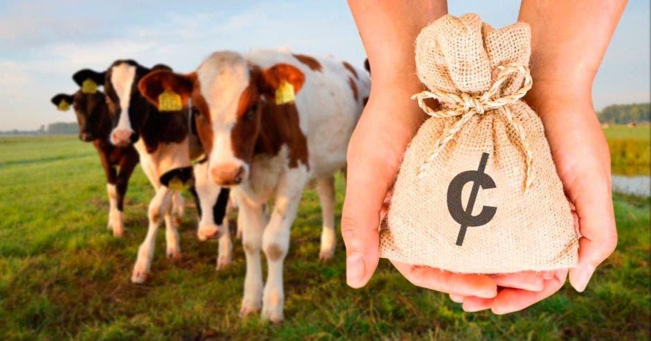 Fondos para ganadería