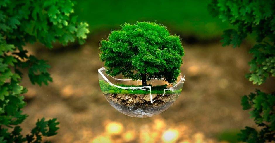 Un árbol plantado