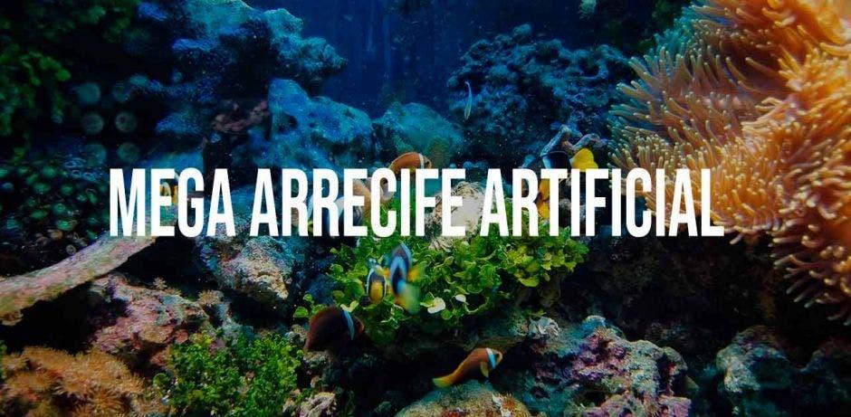 Peces alrededor de un coral
