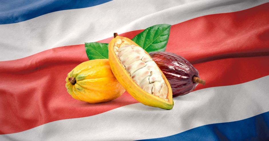 Cacao nacional