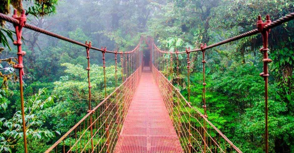puente colgante en medio de bosque nuboso