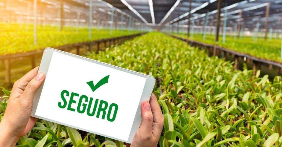 Seguros agrícolas