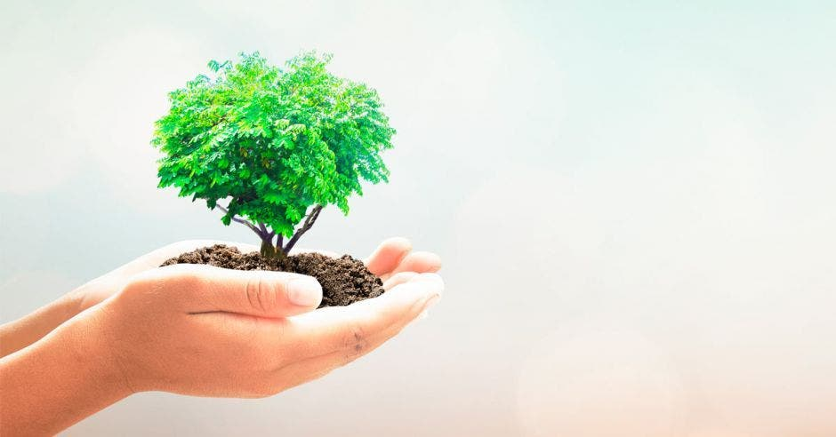 un pequeño árbol en las manos