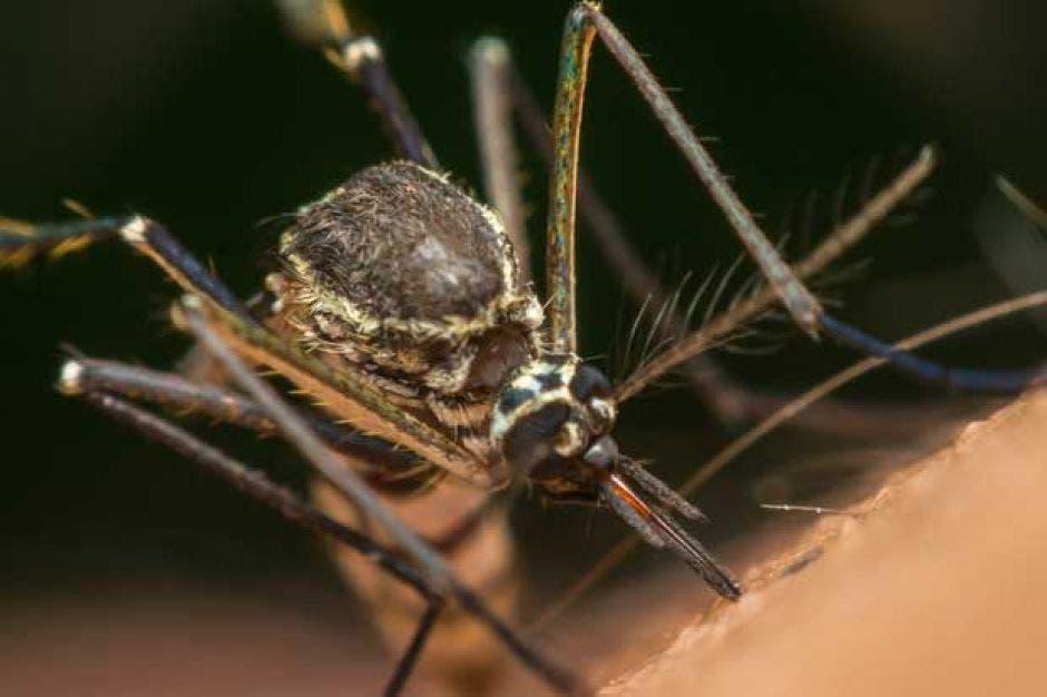 Mosquitos en Costa Rica más fuertes