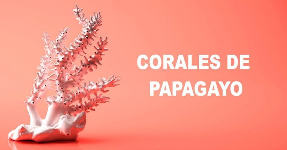 Corales de Papagayo