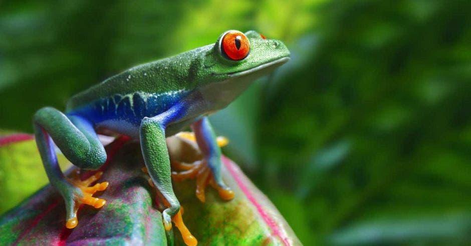 una rana hermosa en una rama