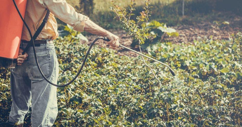 Un agricultor rocía sus cultivos con el plaguicida