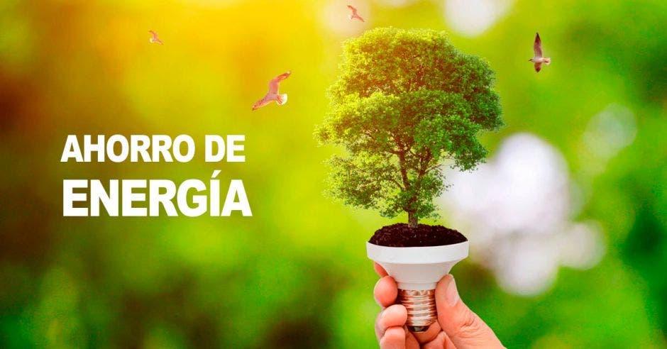 Árbol, bombillo, ahorro, energía