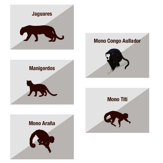 iconos de un jaguar, un manigordo y tres especies de monos