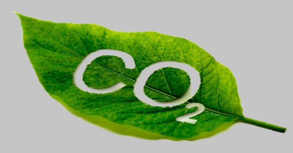 Una hoja con las siglas CO2