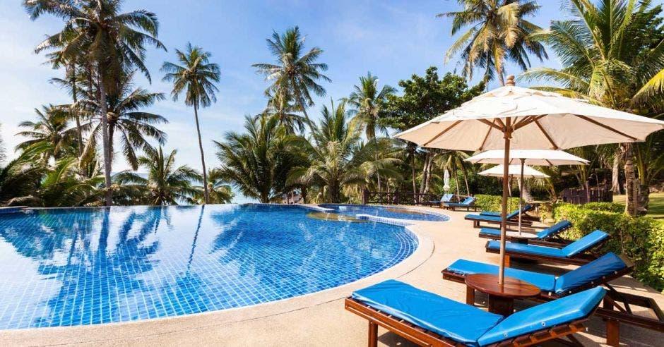 Piscina rodeada de palmeras