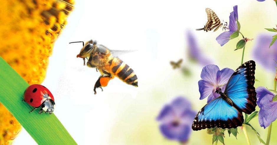 Abejas, mariquitas y mariposas, distintas especies polinizadoras