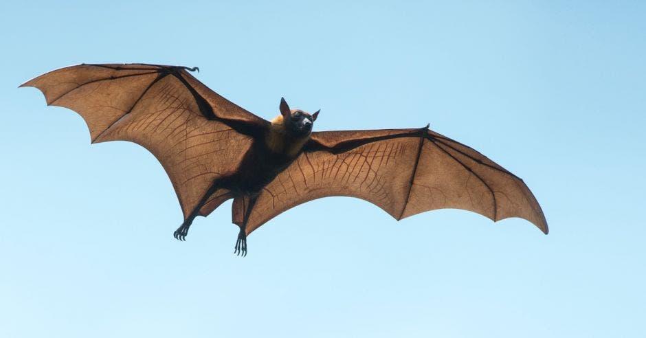 Un murciélago volando