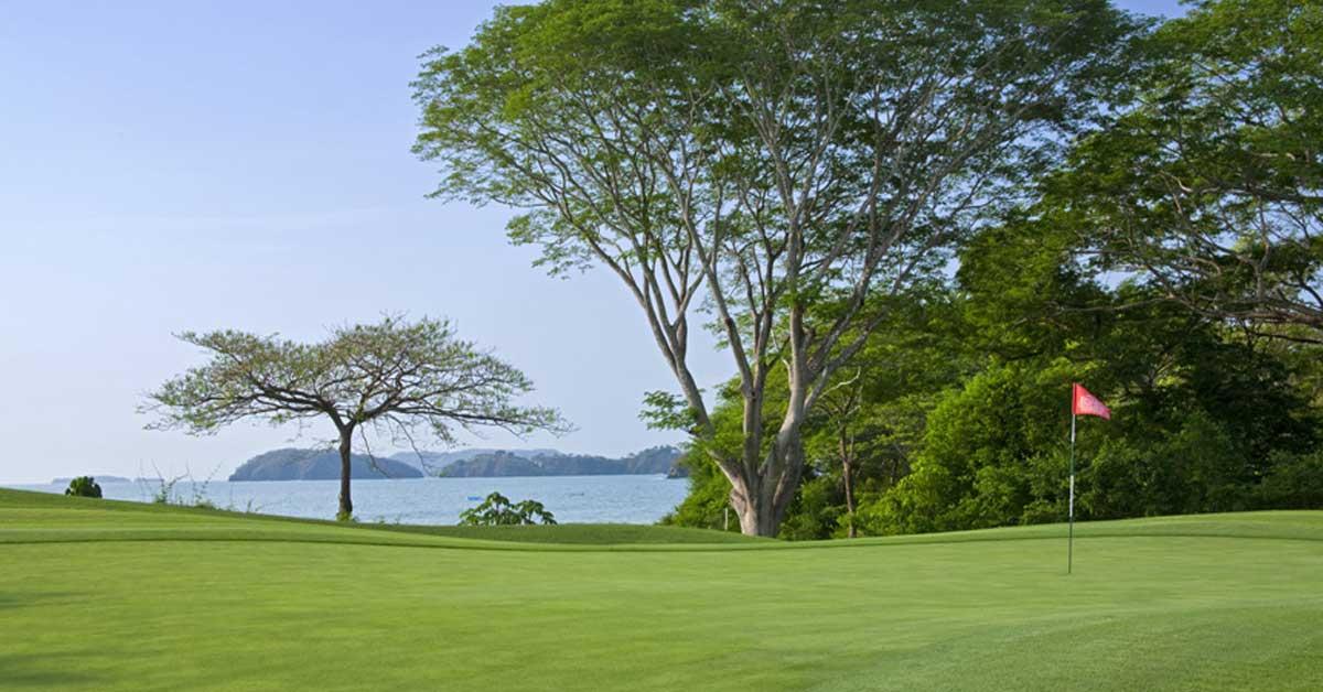 campo de golf, árboles alrededor