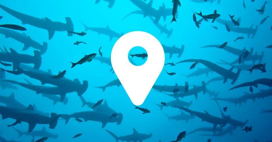 Una manada de tiburones junto a una señal de GPS