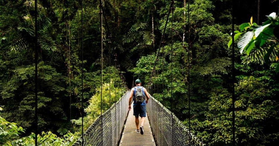 hombre caminando por puente colgante en medio del bosque