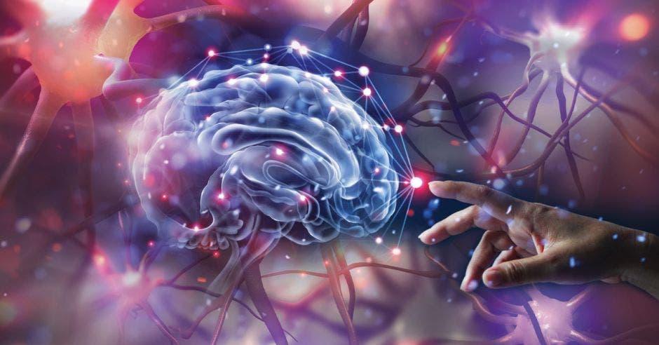 """""""El cuarto cerebro"""", ubicado detrás de la frente en la corteza prefrontal"""
