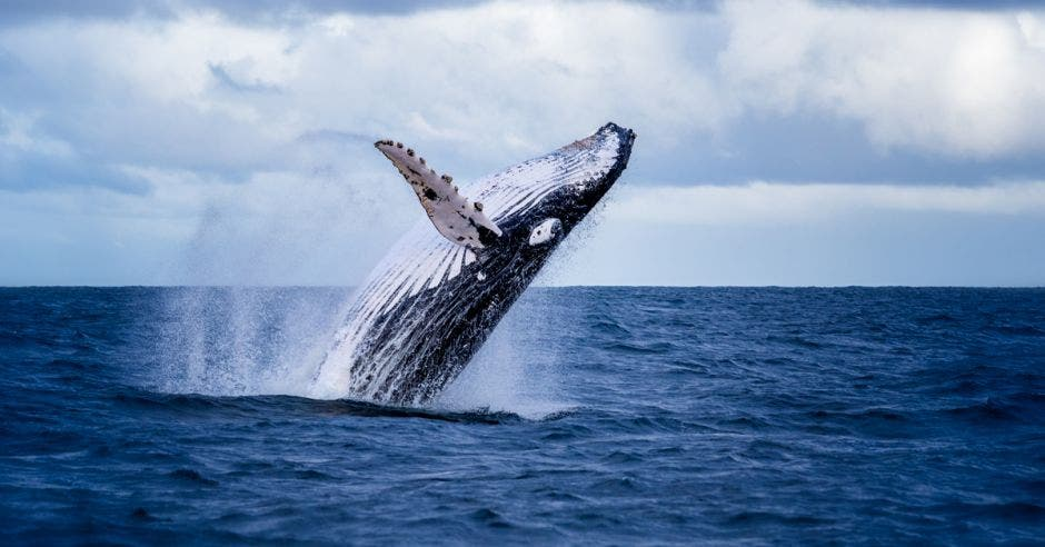 ballena saltando