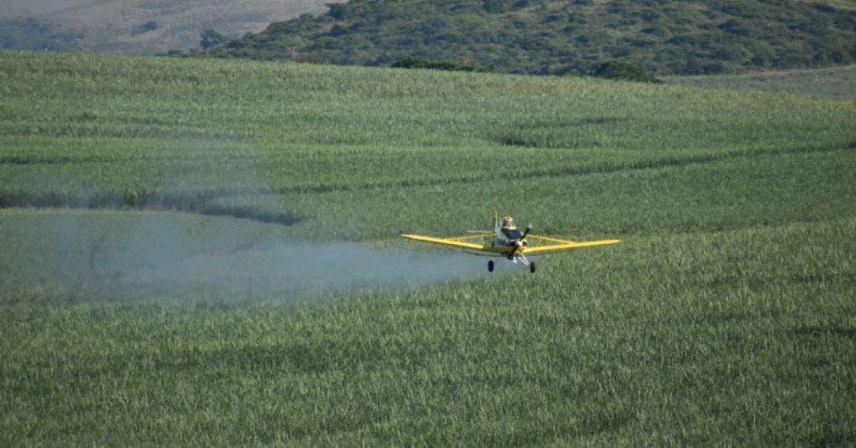 Una avioneta fumiga una plantación piñera