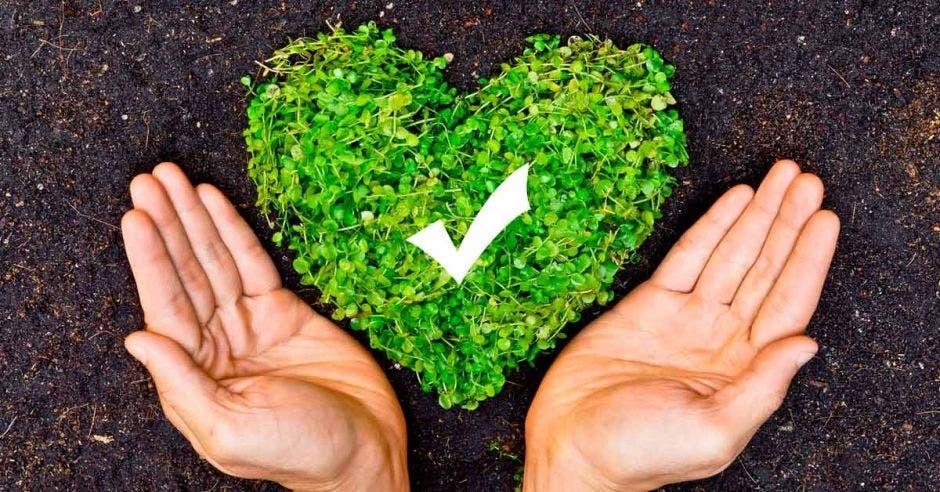 Un corazón verde