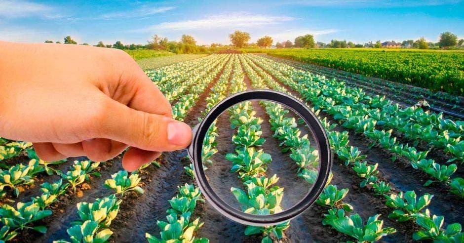 Uso de herbicida en una maleza