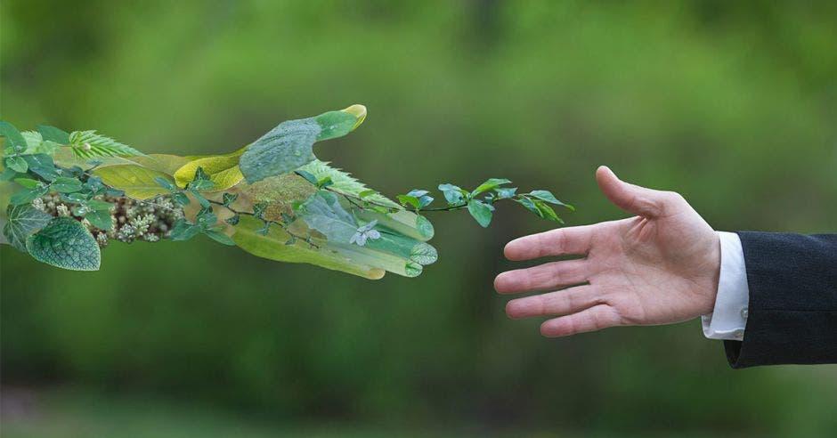 Una mano ilustrativa de hojas se da la mano con una mano de una hombre con traje entero