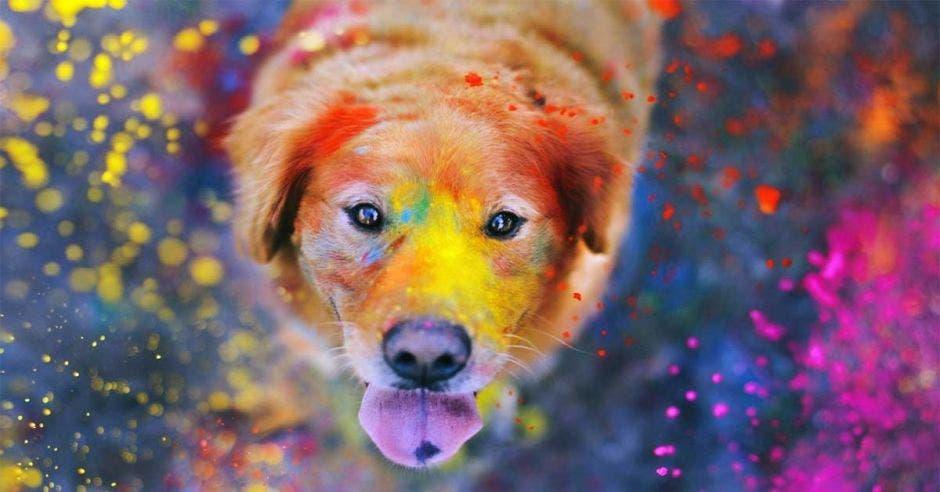 perro con colores en la cara