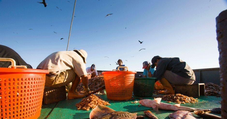 Pescadores utilizan pesca de arrastre